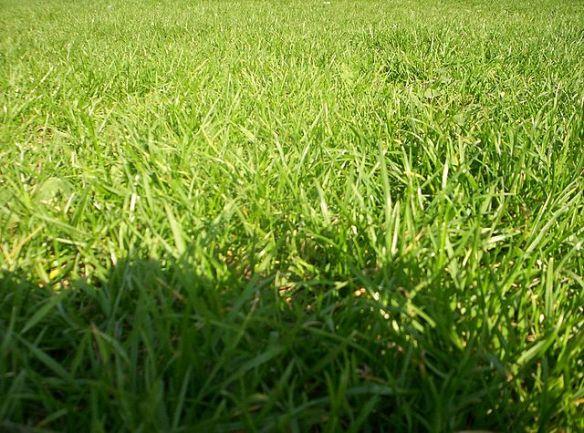 val-grass