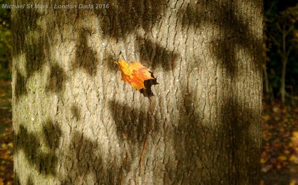 Autumn Flypast